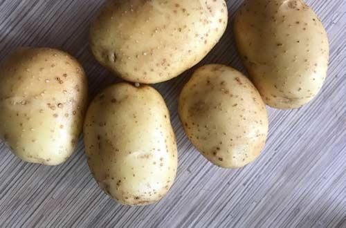 Особенности картофеля сорта Бриз