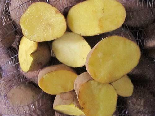 Особенности картофеля сорта Бриз - что нужно знать
