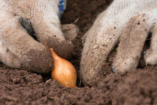 Какие овощи лучше посадить осенью