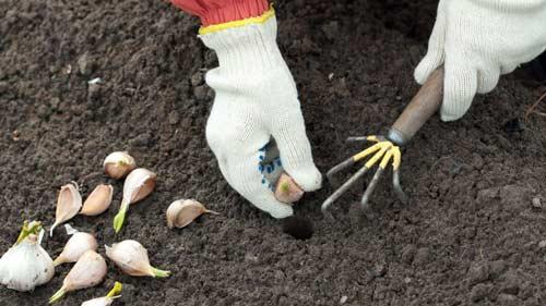 Какие овощи лучше посадить осенью на своем участке