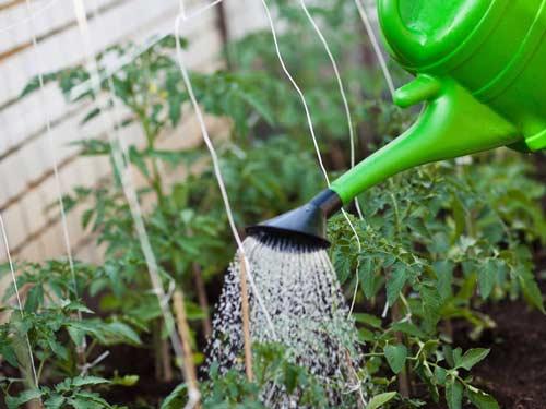 Подкормка растений мочевиной на дачном участке