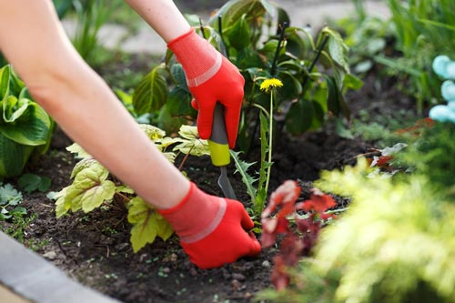 Польза и вред от сорняков