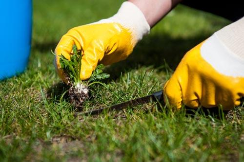 Польза и вред от сорняков - какие бывают