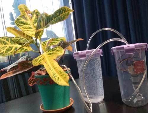 Практические советы по поливу комнатных растений