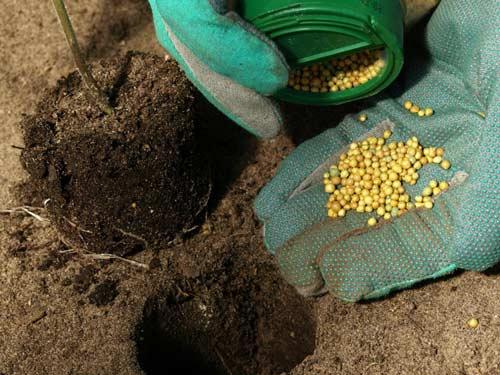 Правильный расчет доз внесения минеральных удобрений