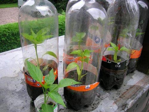 Выращивание в домашней теплице рассады и овощей