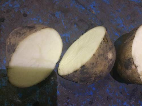 Выращивание картофеля сорта Саротоп