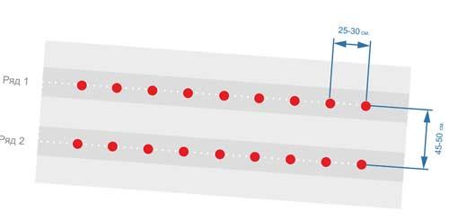 Схема посадки перца на грядках - как правильно