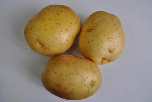 Сорт картофеля Молли