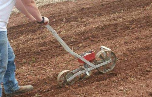 Технология высадки чеснока вручную