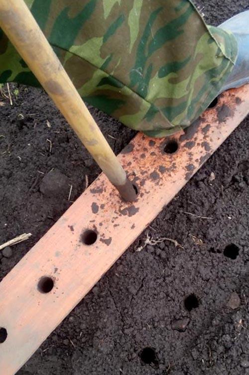 Технология высадки чеснока вручную на участке
