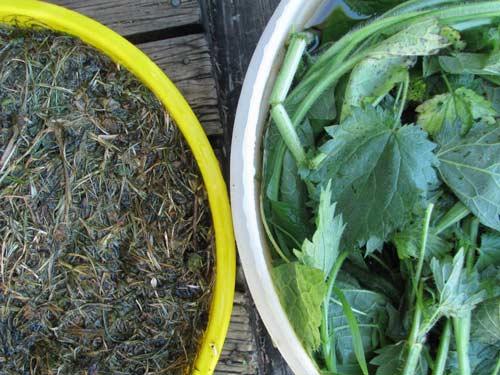 Как правильно сделать удобрение из травы