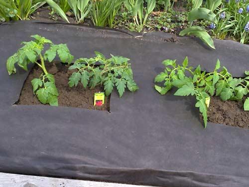 Укрывной материал от сорняков при выращивании