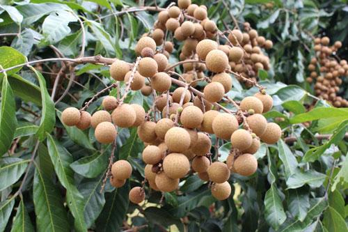 Выращивание экзотических плодов и их удобрение
