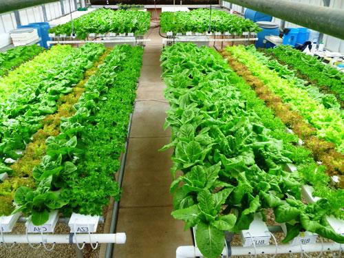 Выращивание овощей и цветов на продажу