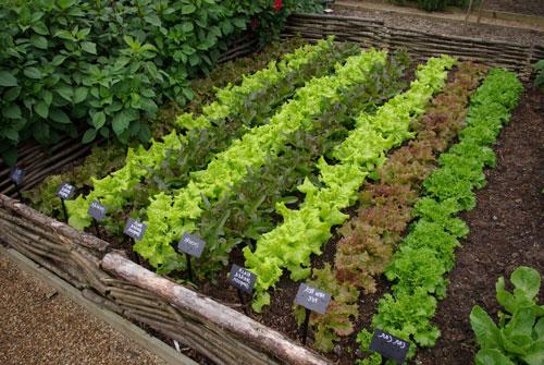 Выращивание зеленых овощных культур на закрытом грунте